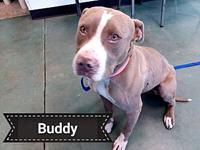 Buddy's story Sweet Buddy is approximately 2-3 year