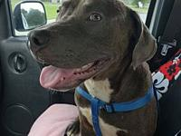 Buddy's story Buddy is a very sweet, affectionate,