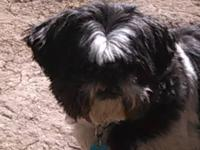Buddy is a displaced 10 year old Shih Tzu that is