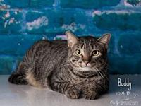 Buddy (tt)'s story TT WAS NEUTERED AT HSOY CLINIC ON