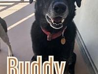 My story Buddy is a 5-6 yr old Lab mix. Buddy would be