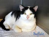 Buffalo's story PAW Animal Shelter is a high intake No