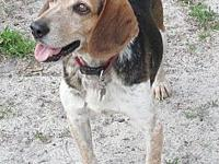 Buford's story GOT BEAGLE? Meet BUFORD, a 2-1/2