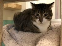 My name is Buford and I am a 4 year old, male, Domestic