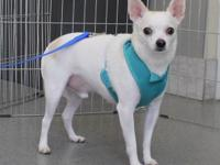 Meet Bug!! He is a shy sort of guy and is looking for a