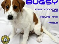 Bugsy's story You can fill out an adoption application