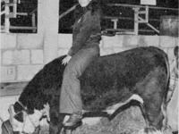 Had a W/F Hereford steer in FFA in 1976. I've had