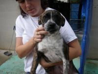 Bull Terrier - Flossy - Medium - Adult - Female - Dog