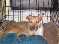 Bull Terrier - Lottie - Medium - Baby - Female - Dog