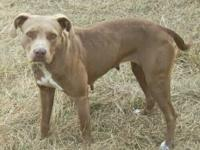 Bull Terrier - Lynwood - Medium - Young - Male - Dog