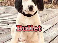 Bullet's story Hi! Im Bullet. I was born in Georgia and