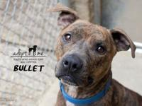 Bullet's story From our fabulous foster Heather: Meet