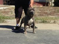 UKC REG GREAT DEAL DONT SLEEP ON THIS BOY 24 INCH HEAD