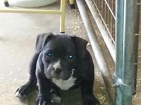 I have three male bully dogs. All have there ukc reg