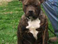 We have a beautiful American Bully ready for her