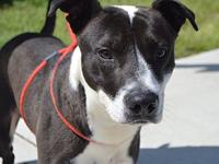 BUMBLEBEE-URGENT's story We do not euthanize any dogs,