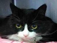 BUMPER's story Bumper is a 14 year old female black and