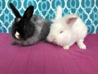 Bunilla Ice and Bunyonce have joined us from UPAWS!