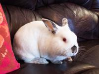 Bunnicula is a cute little boy looking for a forever