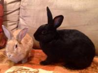 Introducing Bunnicula &  Sprinkles, bunnies who were