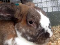 We have lots of different rabbits currently available