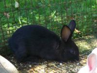 I have two rabbits for sale they are both very sweet