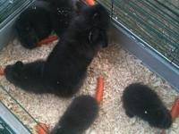 I have 5 beautiful bunnies ready for a new home.. They