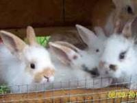I have mini rex,mini lop,lionhead and dutch they are