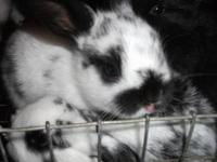 We have bunnies available ready to go now. Choose from