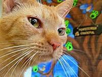 Bunny's story Bunny is a female small orange tabby,