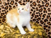 Bunny's story Adoption fee for cats is $65.00 which