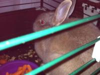 Bunny Rabbit for sale........We love this bunny but we
