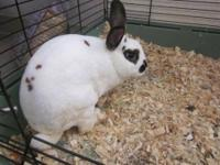Bunny Rabbit - A658055 - Small - Young - Male - Rabbit