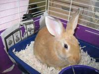 Bunny Rabbit - Blackberry - Small - Baby - Male -