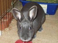 Bunny Rabbit - Bunny Female - Medium - Young - Female -