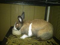 Bunny Rabbit - Hurley***courtesy Post*** - Small -
