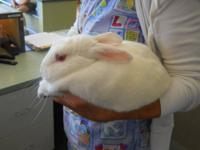 Bunny Rabbit - Opal - Medium - Adult - Female - Rabbit