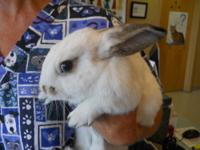 Bunny Rabbit - Petunia - Small - Young - Female -