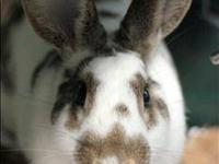 Bunny Rabbit - Pierre - Medium - Adult - Male - Rabbit