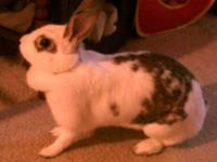 Bunny Rabbit - Snickers - Medium - Young - Female -