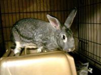 Bunny Rabbit - Trinity - Medium - Adult - Female -