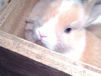 i have 5 bunnies i am looking to rehome . i have males