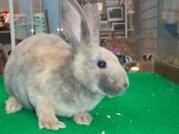 Netherland dwarf bunnies $24 each have 7 for sale 8 -12
