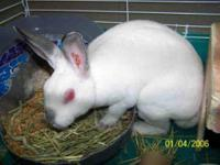 Bunny Rabbit - A073784 - Medium - Young - Rabbit