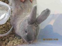 Bunny Rabbit - A600267 - Small - Adult - Rabbit
