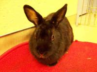 Bunny Rabbit - Myrtle - Small - Adult - Female -