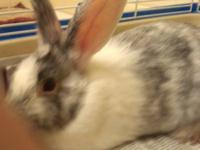 Bunny Rabbit - Peter - Small - Young - Male - Rabbit