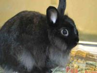 Bunny Rabbit - Phooey - Medium - Baby - Male - Rabbit