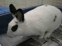 Bunny Rabbit - Twilight - Small - Adult - Male -