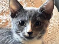 Burrito's story Burrito is a female kitty that was born